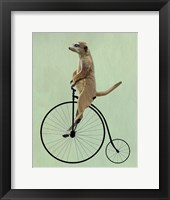 Framed Meerkat on Black Penny Farthing