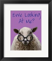 Ewe Looking at Me DeNiro Sheep Framed Print