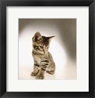 Framed Cute Kitty