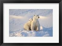 Framed Mother Polar Bear and Cub I