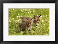 Framed Wild Cat Cubs