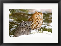 Framed Winter Owls