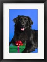 Framed Dog with Present