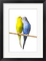 Framed Two Love Birds I