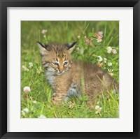 Framed Wild Cat Cub
