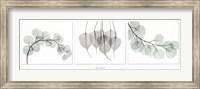 Framed Evergreen Triptych