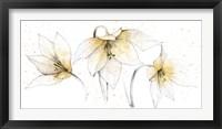 Framed Gilded Graphite Floral Trio
