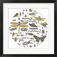 Framed Insect Circle I
