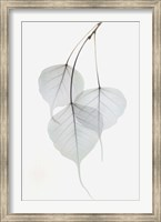 Framed Bo Tree