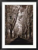 Framed Country Road II