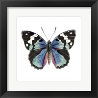 Butterfly Botanical II Framed Print