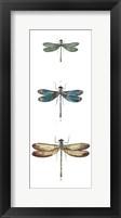 Dragonfly Study I Framed Print