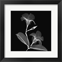 Mandelilla Shadow 2 Framed Print
