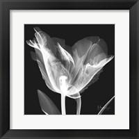 Lusty Tulip 1 Framed Print
