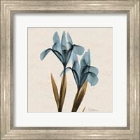 Framed Iris Blue Brown B18