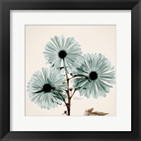 Framed Chrysanthemum Sky