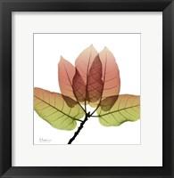 Framed FicusBurkey Fall