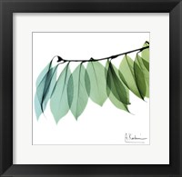 Framed Camelia Leaf