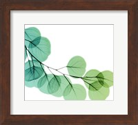 Framed Eucalyptus Green
