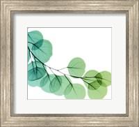 Framed Eucalyptus Green