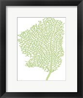 Framed Sea Fan 1