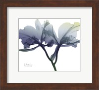 Framed Midnight Orchid 1