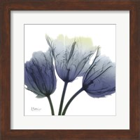 Framed Midnight Tulips Trio