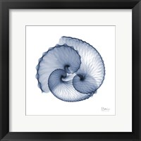 Framed Indigo Sea Shells