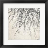 Framed Branches