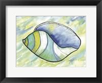 Framed Underwater Shell 2