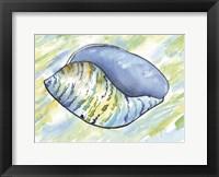 Framed Underwater Shell 4