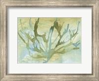 Framed Seafoam Coral II