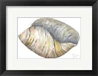 Framed Sea Shell Neutral 1