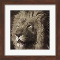 Framed Animal Instincts