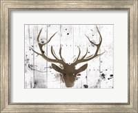 Framed Brown Deer Head