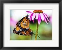Framed 2 Butteflies Hanging