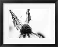 Framed Black And White Butterflies