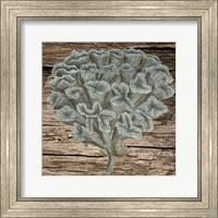 Framed Vintage Coral