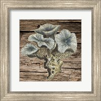 Framed Vintage Coral 1