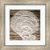 Framed Wooden Clam