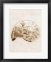 Shell Sepia II Framed Print