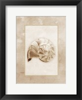 Sepia Shell II Framed Print
