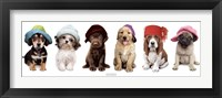 Framed Hat Hounds