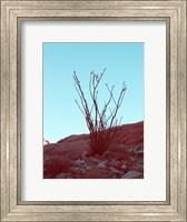 Framed Desert Plant