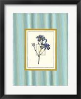 Framed Botanical XIII