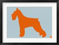 Framed Standard Schnauzer Orange