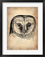 Framed Vintage Owl