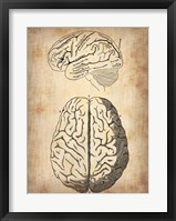 Framed Vintage Brain Anatomy