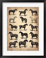Framed Vintage Horses Collection