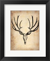 Framed Vintage Deer Scull
